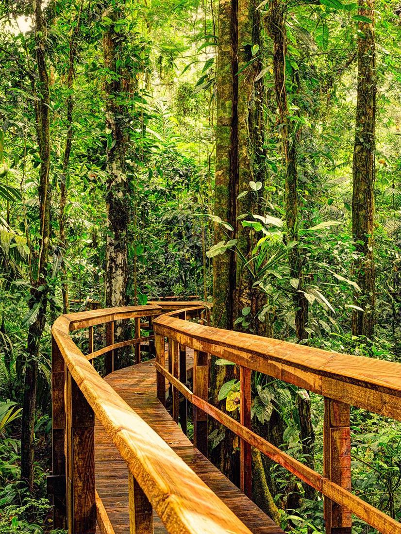 """Rainforest Boardwalk"" bei Cinco Ceibas | Foto: Cinco Ceibas"